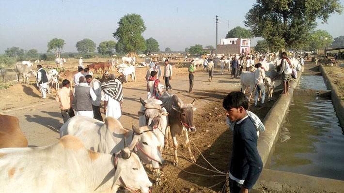 The annual cattle fair in Bateshwar