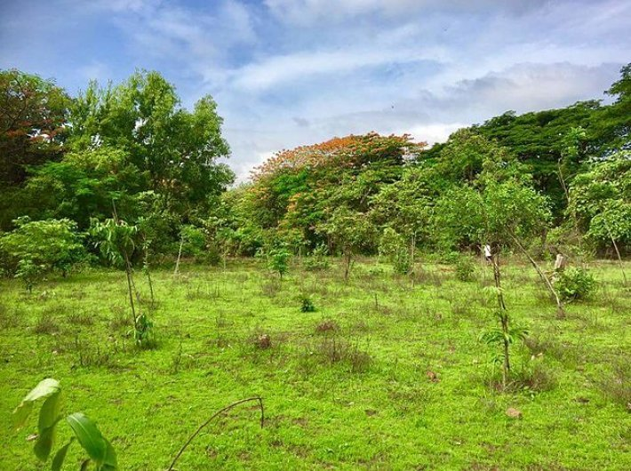 Aarey Forest (Photo courtesy: Creative Commons)