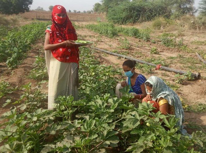 Tribal women at work in a Poshan Vatika (Photo Courtesy: Adani Foundation)