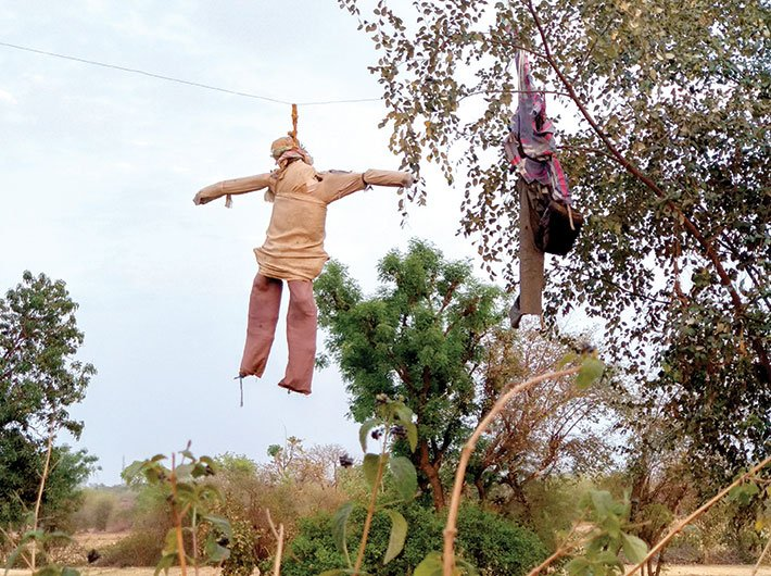 The resemblance to a suicide by hanging is uncanny and stark. This hanging scarecrow near Tikamgarh is an ominous reminder of farmland distress in the Bundelkhand region. Photo by Deepak Parvatiyar
