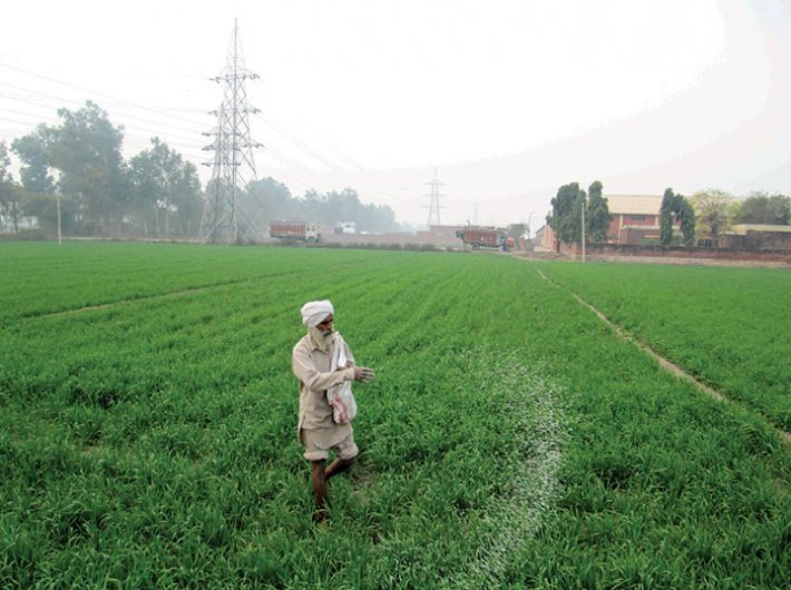 A farmer working in a rice field on the outskirts of Ludhiana