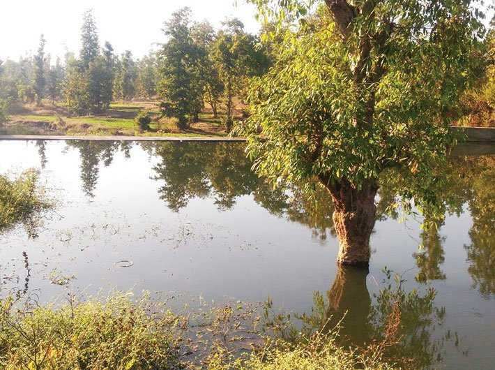 A check dam renovated by Rovadan Trust with funding from Dakshin Gujarat Vij Company Limited (Photo: Rovadan Trust)