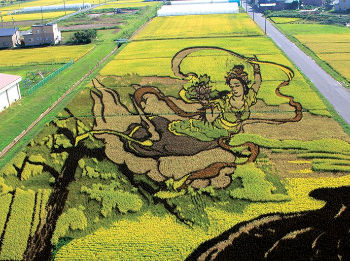 The paddy art that has helped revitalise the Inakadate village economy.