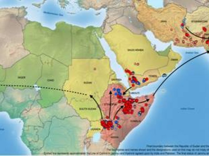 The FAO image of the desert locust global forecast for July 2020