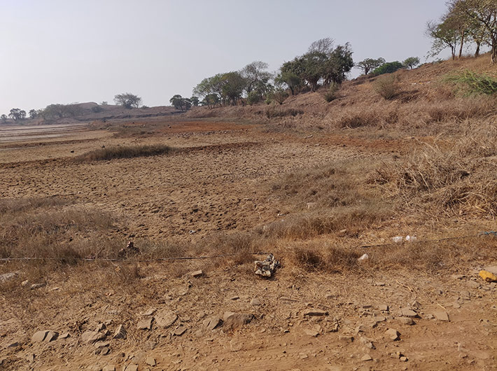 Panje wetland goes dry on and off as water flow is blocked by vested interests. (Photo courtesy: BN Kumar, NatConnect Foundation)