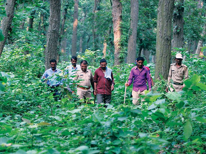 A search party inside the forest in the Bankati range of the Pilibhit reserve. (Photos: Arun Kumar)