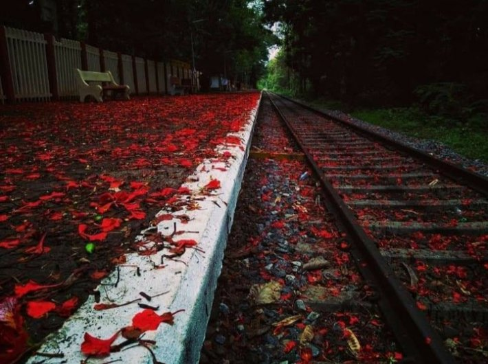 The fragrance of flowers fill up the emptiness cast by #lockdown - Beautiful red blossoms replete the spaces touched by footfalls A mesmerizing scene at Melattur Station in the picturesque Shoranur - Nilambur section in Palakkad Division of Kerala